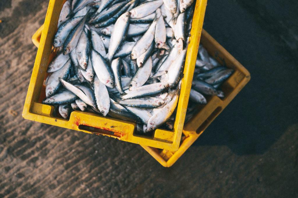 魚油 健康のイメージ